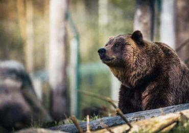 भालु आतङ्क रोक्न प्रहरी परिचालित